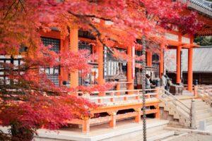 momdzi-festival-japan